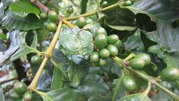 え?ここが農園? – ネパールのコーヒー農園に行って来ました