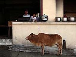 インドで生水を飲んじゃった!!