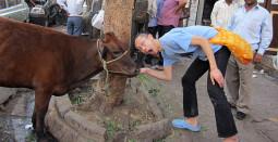 俺の牛に餌をやれ! インドの給餌ビジネス