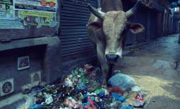 インド人のゴミに対する意識が変わってきた。 清掃スローガン スワッチ・バーラット