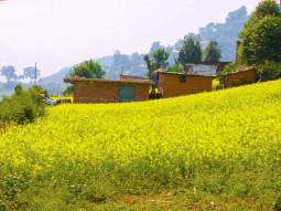 草木息吹く、ネパールの春のいろいろを紹介します! 【ティラキタ駱駝通信 3月28日号 】