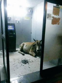 ATMを使っている最中に、突然停電になったときはどうするの?【ティラキタ駱駝通信 5月3日号】
