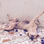 インドの面白い犬特集! あられもない姿の犬ちゃん達