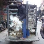 脳みそ屋さんに、風車屋さん。 インドのおもしろ職業を紹介 Vol.1