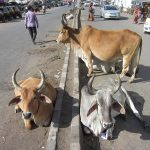 牛糞で作る料理と、急速に電化&ガス化が進むインドの関連性