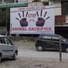 車を買うともれなく鶏が生け贄に-インドヒマラヤ地方の伝統